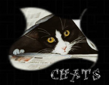 chats-titre.jpg